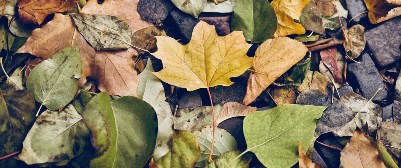Como nas folhas, a medicina chinesa possui muitas cores e formas