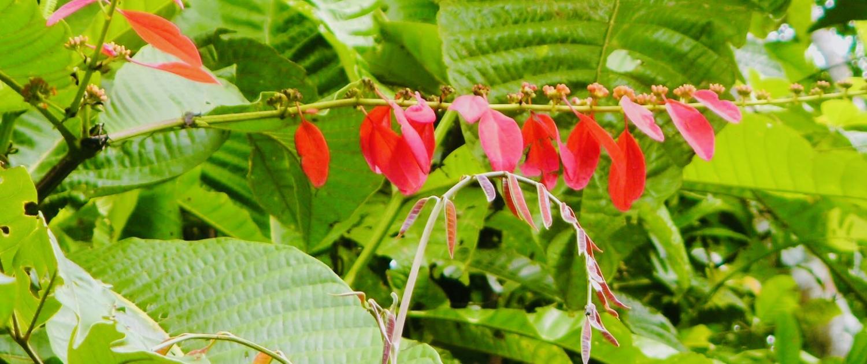 A medicina deve ser como a Primavera: Cheia de esperança, luz e cor